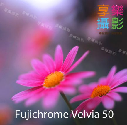 Fujichrome Velvia 50 (RVP 50) 極細膩 飽和 正片 華山 光華 富士 120 底片